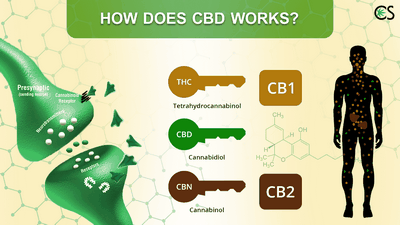 Does CBD Oil Work? The biggest thing to remember