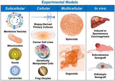 Understanding Liver Cancer virus, human immunodeficiency virus, or